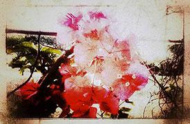 SCARICARE FOTO SU IPHOTO